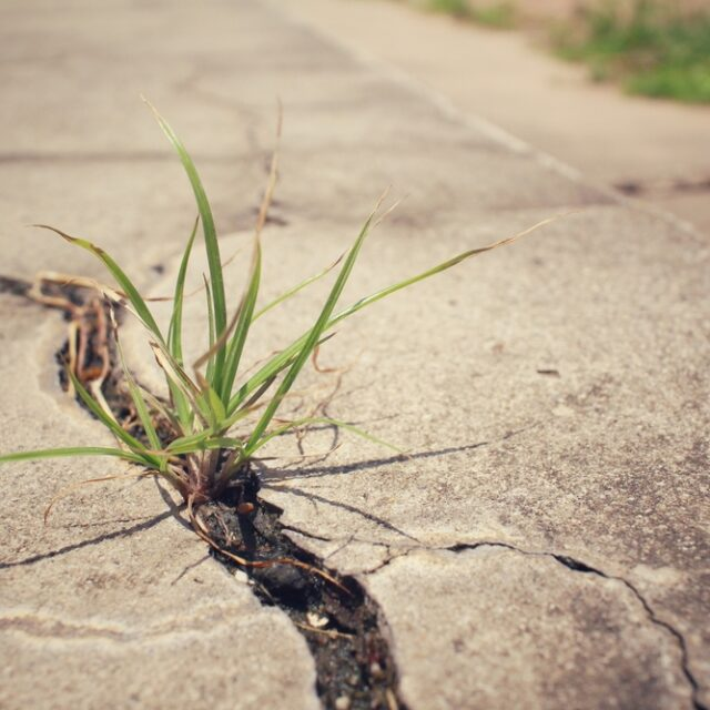 3 Common Reasons Why Your Driveway Might Be Cracking